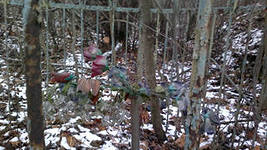 В Хотьково зафиксировано 5378 безнадзорных захоронений.